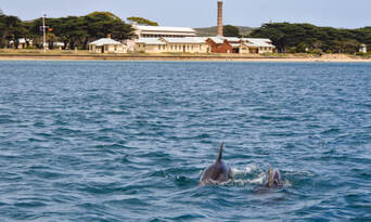 Dolphin and Seal Watching Eco Adventure Cruise Thumbnail 5