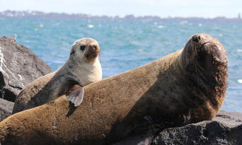 Dolphin and Seal Watching Eco Adventure Cruise Thumbnail 6