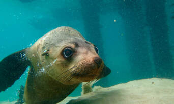 Dolphin and Seal Swim Reef Snorkel Tour Thumbnail 3