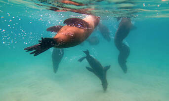 Dolphin and Seal Swim Reef Snorkel Tour Thumbnail 6