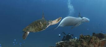 Cook Island Scuba Diving Tour Thumbnail 1