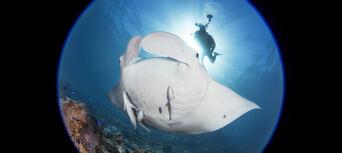 Cook Island Scuba Diving Tour Thumbnail 4