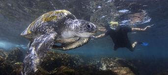 Cook Island Scuba Diving Tour Thumbnail 5