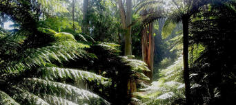 Dandenong Ranges Tour  including the William Ricketts Sanctuary Thumbnail 4