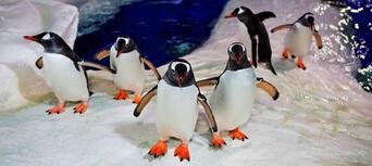 SEA LIFE Kelly Tarltons Aquarium and Auckland Zoo Package Thumbnail 4