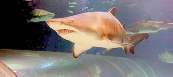 SEA LIFE Kelly Tarltons Aquarium and Auckland Zoo Package Thumbnail 3