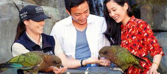 SEA LIFE Kelly Tarltons Aquarium and Auckland Zoo Package Thumbnail 5