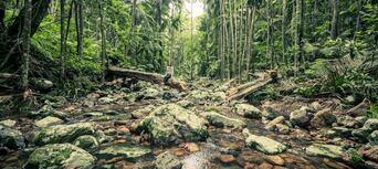 Minyon Waterfall Rainforest Tour from Byron Bay Thumbnail 1