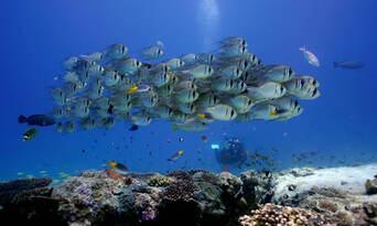 Ningaloo Reef Diving Day Tour departing Exmouth Thumbnail 3