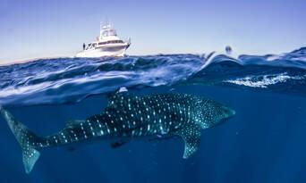 Ningaloo Reef Diving Day Tour departing Exmouth Thumbnail 1
