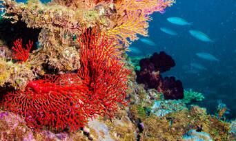 Ningaloo Reef Diving Day Tour departing Exmouth Thumbnail 2