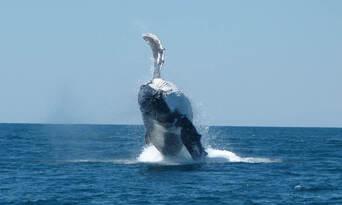 Ningaloo Reef Diving Day Tour departing Exmouth Thumbnail 6
