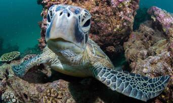 Ningaloo Reef Diving Day Tour departing Exmouth Thumbnail 5