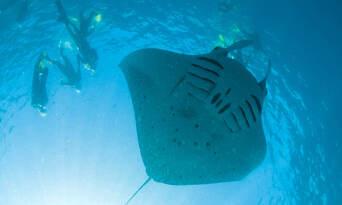 Ningaloo Reef Diving Day Tour departing Exmouth Thumbnail 4