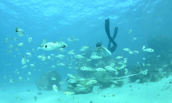 Outer Reef or Island Snorkel Tour from Exmouth Thumbnail 1