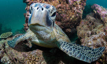 Outer Reef or Island Snorkel Tour from Exmouth Thumbnail 4
