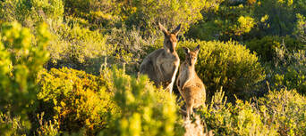 Coffin Bay Day Tour from Port Lincoln including Wine Tasting and Gourmet Lunch Thumbnail 6