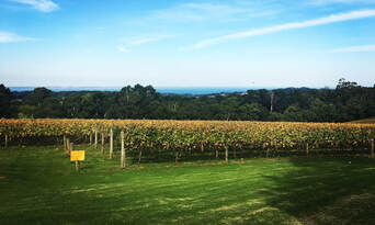 Mornington Peninsula Winery Bus Tour including Lunch and Glass of Wine Thumbnail 6