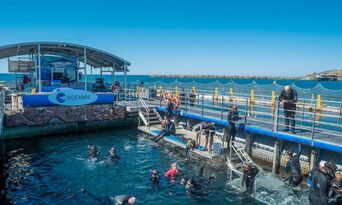 Victor Harbor Swim with the Tuna Experience + Seafood Tasting Platter Thumbnail 3