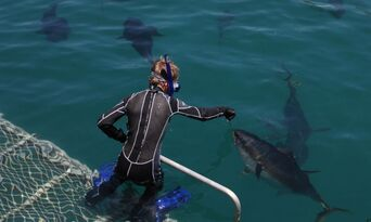 Victor Harbor Swim with the Tuna Experience + Seafood Tasting Platter Thumbnail 6