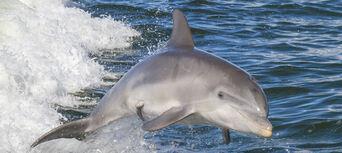 Noosa Dolphin Spotting Cruise Thumbnail 1