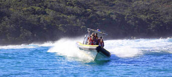 Whale Watching Adventure Cruise from Noosa Thumbnail 5