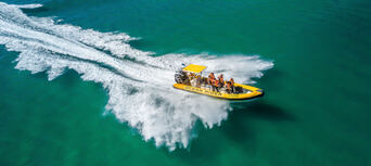 Whale Watching Adventure Cruise from Noosa Thumbnail 2
