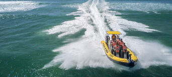 Whale Watching Adventure Cruise from Noosa Thumbnail 6