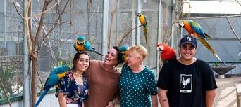 Maleny Botanic Gardens Aviary Tour Thumbnail 1