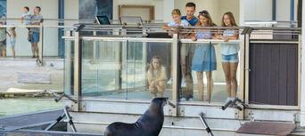 Sea World Seal Encounter Thumbnail 3