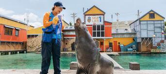 Sea World Seal Encounter Thumbnail 4