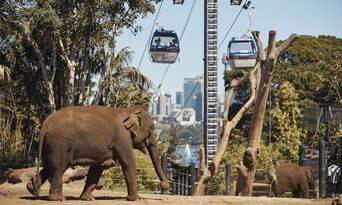 Taronga Zoo Sydney General Admission Thumbnail 2