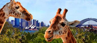 Taronga Zoo Sydney General Admission Thumbnail 1