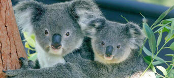 Taronga Zoo Sydney General Admission Thumbnail 3