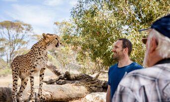 Cheetah Experience at Monarto Safari Park Thumbnail 1