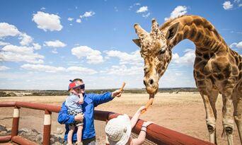 Giraffe Safari at Monarto Safari Park Thumbnail 3