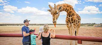 Giraffe Safari at Monarto Safari Park Thumbnail 1