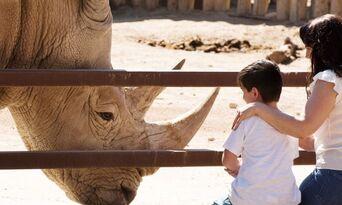 Rhino Interactive at Monarto Safari Park Thumbnail 3