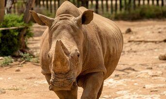 Rhino Interactive at Monarto Safari Park Thumbnail 2