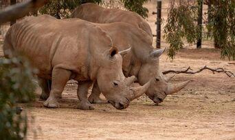 Rhino Interactive at Monarto Safari Park Thumbnail 4