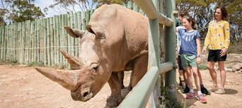 Rhino Interactive at Monarto Safari Park Thumbnail 1