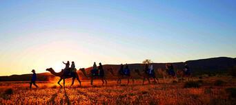 Alice Springs Sunset Camel Ride Thumbnail 1
