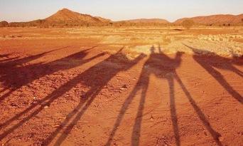 Alice Springs Sunset Camel Ride Thumbnail 4