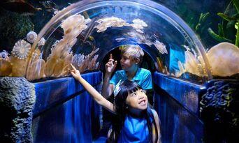 LEGOLAND Discovery Centre + SEA LIFE Melbourne Aquarium Combo Thumbnail 4