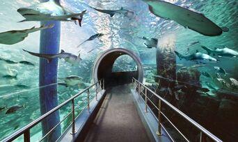 LEGOLAND Discovery Centre + SEA LIFE Melbourne Aquarium Combo Thumbnail 6