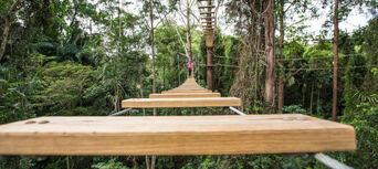 Sunshine Coast Treetop Challenge Thumbnail 4