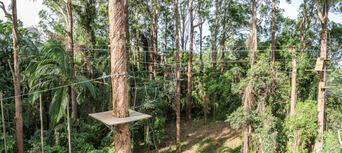 Sunshine Coast Treetop Challenge Thumbnail 6