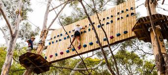Adelaide TreeClimb Thumbnail 2