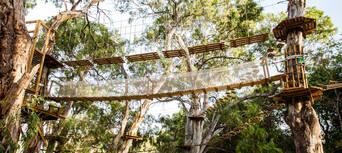 Adelaide TreeClimb Thumbnail 4