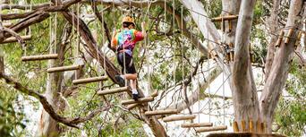 Adelaide TreeClimb Thumbnail 6